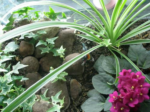 Common house plants images - Common house plants names ...