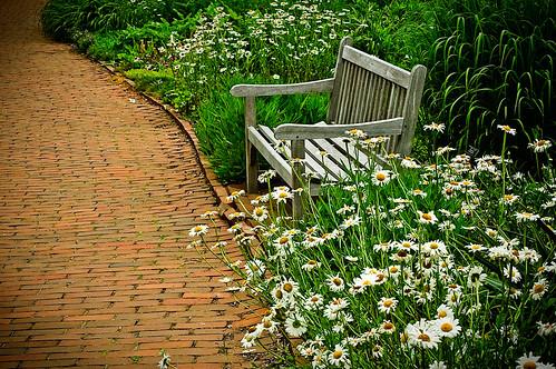 brick june gardens daisies path wildflowers 2009 paved thekingwoodcenter