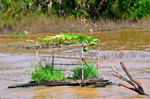 Cambodia-2875 - Floating Garden