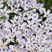 Small photo of Huddle of flowers