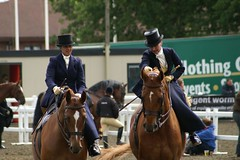 animal sports, equestrianism, english riding, eventing, dressage, stallion, equestrian sport, sports, recreation, outdoor recreation, equitation, horse, person,