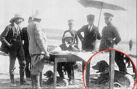 Mustafa Kemal Atatürk ve Köpekleri 06
