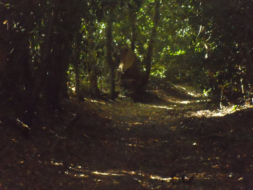 """""""Ghostly"""" figure Edenbridge to Westerham This figure in medieval dress was visible for quite a distance. As I got closer however it turned out to be a large tree stump."""