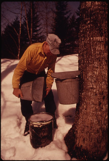This Dairy Farmer near Randolph Center, Vermont ..., 04/1974