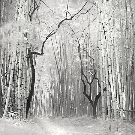 Bambooforest,Kyoto,#02