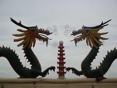 wing(0.0), velociraptor(0.0), dragon(1.0),
