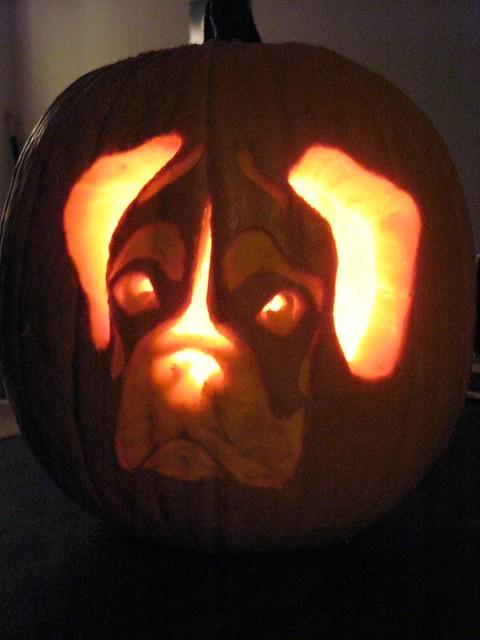Boxer pumpkin    Flick...