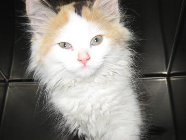 Meet Adoption Cat Problem Spraying
