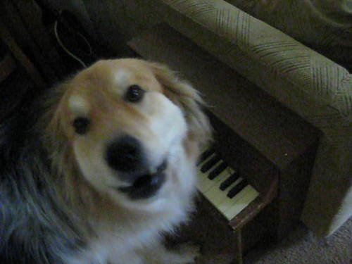 Zeek the Piano Playing Dog