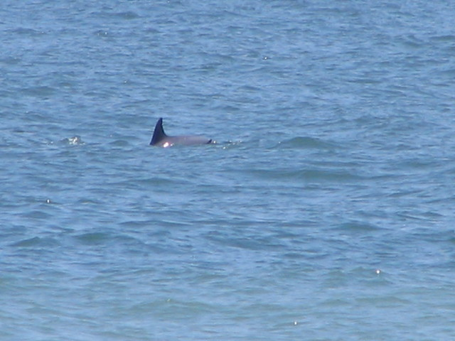 Dolphin Stand Up Paddle Board Virginia Beach