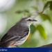 Pássaro - Pedra da Cebola