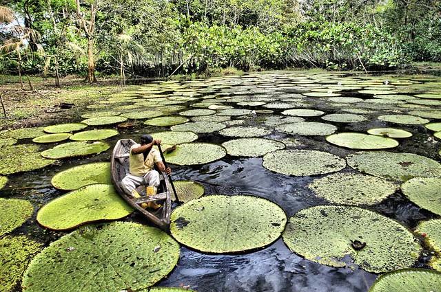 Amazzonia, Brasile