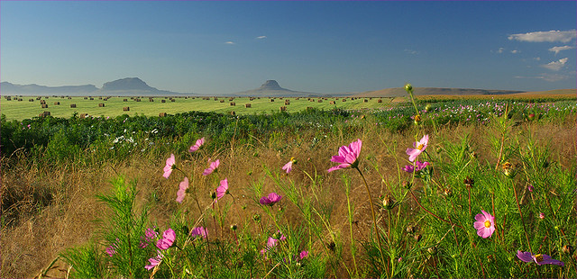d1-Kruger Johan-Vrede landskap