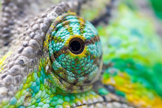 chameleon spectral data
