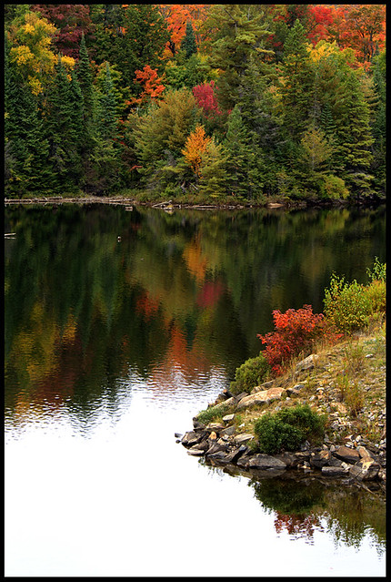 Algonquin Park - Tea Lake