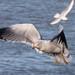 Edg_Res_Birds-17.jpg