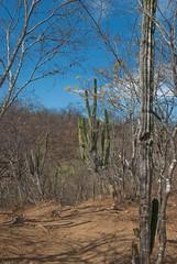 Sierra de la Laguna-1046