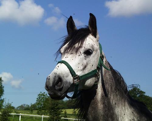 Ein Pferd wie ich mich erinnere, bei jeder Rückkehr in meine Heimat im Erzgebirge 006