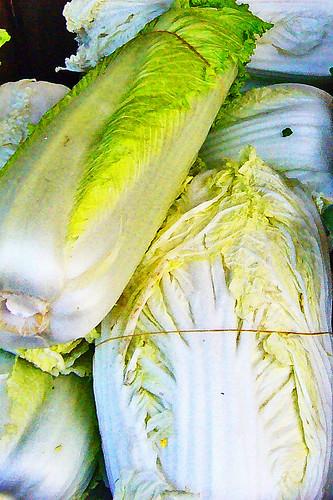 Nappa Cabbage in Chinatown by Old Jingleballicks