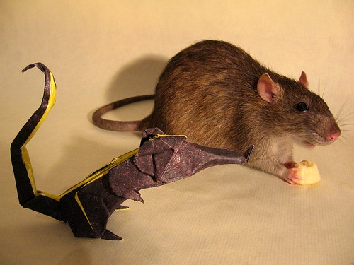 Rat and friend