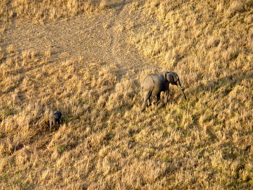 From the hot air balloon, Maasai Mara, Kenya