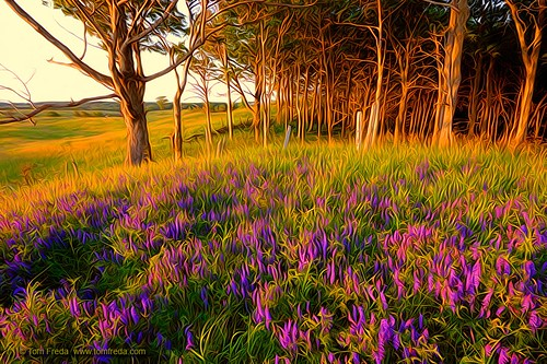 Setting sun on wildflower field