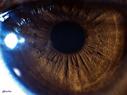 Human Eye Pupil! Extreme Macro Version!