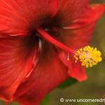 Tropical Flower Macro