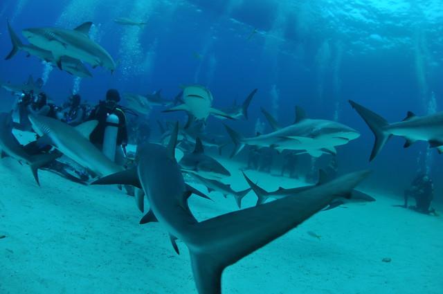 Shark Arena - Nassau, Bahamas
