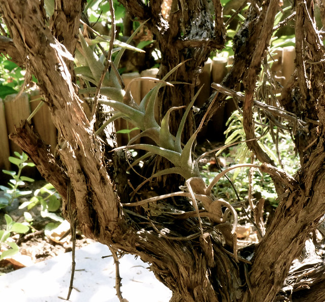 Header of Airplant