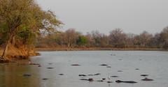 Zambia03SouthLuanga164
