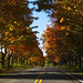 Autumn Drive in Northern Michigan by javagirl24