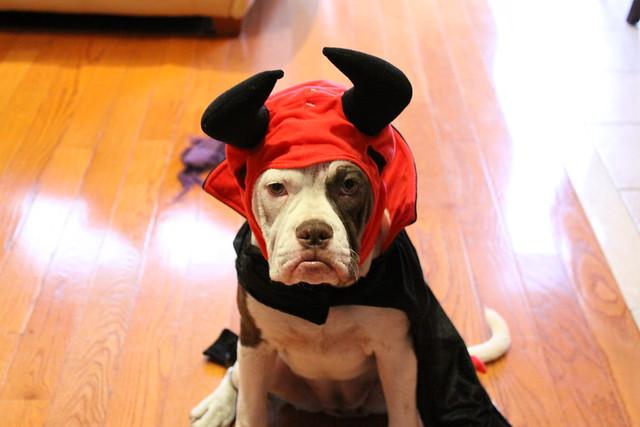 Cute Lil Devil