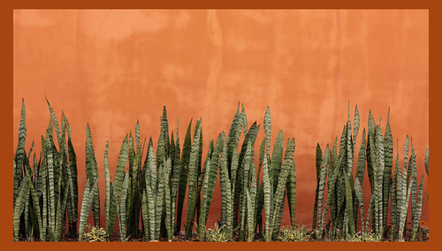 Abstract planting