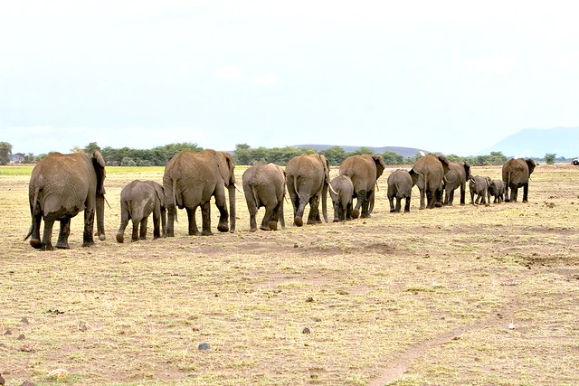 elephants a gallery on flickr