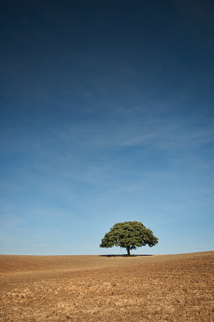 tree - after the harvest