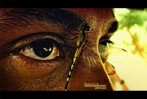 naturaleza macro green eye nature yellow closeup ojo colombia dragonfly libelula planes llanos grotesque convivencia livingtogether casanare grotesco canons5is mauriciovalenzuela curimina fabiancano