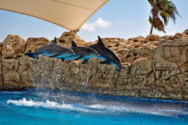 Texas State Aquarium Coupons 2015 Best Auto Reviews