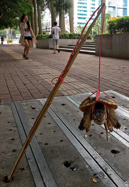 Chinese Turtle Torture