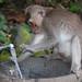 monkey forest ubud 22feb2017 19