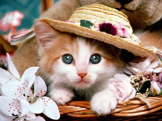 2681_Cat_with_Hat