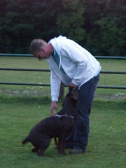 Tips And Tricks Every Dog Trainer Should Know 2