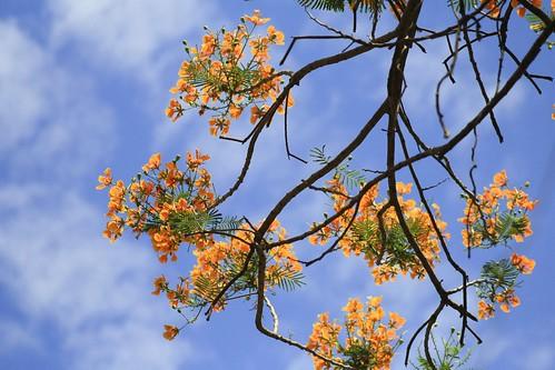 Blue skies & orange flowers