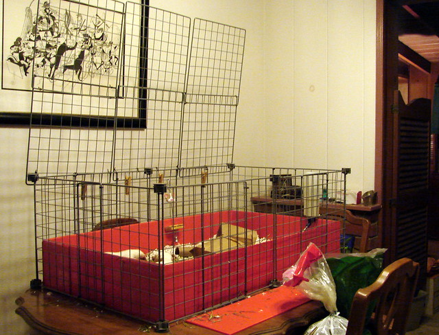 C c cage flickr photo sharing for Where to get c c cages