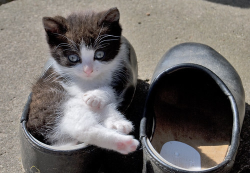 kitten clogs