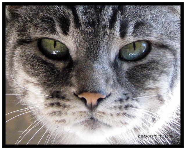 holekitty貓 壁紙