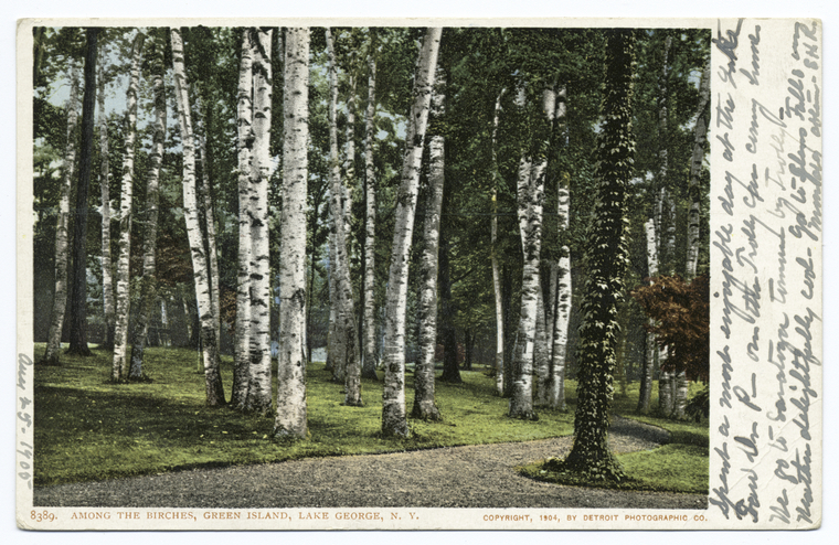 Among the Birches, Green Island, Lake George, N. Y.