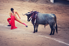 performing arts(0.0), cattle(0.0), animal sports(1.0), cattle-like mammal(1.0), bull(1.0), temple(1.0), tradition(1.0), mammal(1.0), matador(1.0), performance(1.0), bullfighting(1.0),