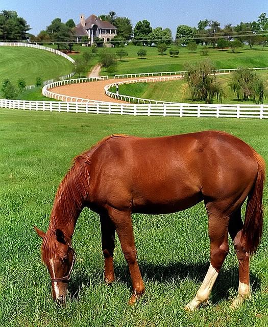 Lexington kentucky donamire farm the good life for for Horse farm