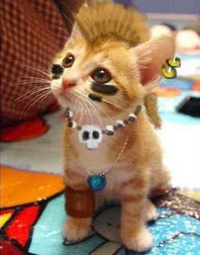 3746215682 f54b70f62b jpgRasta Cat